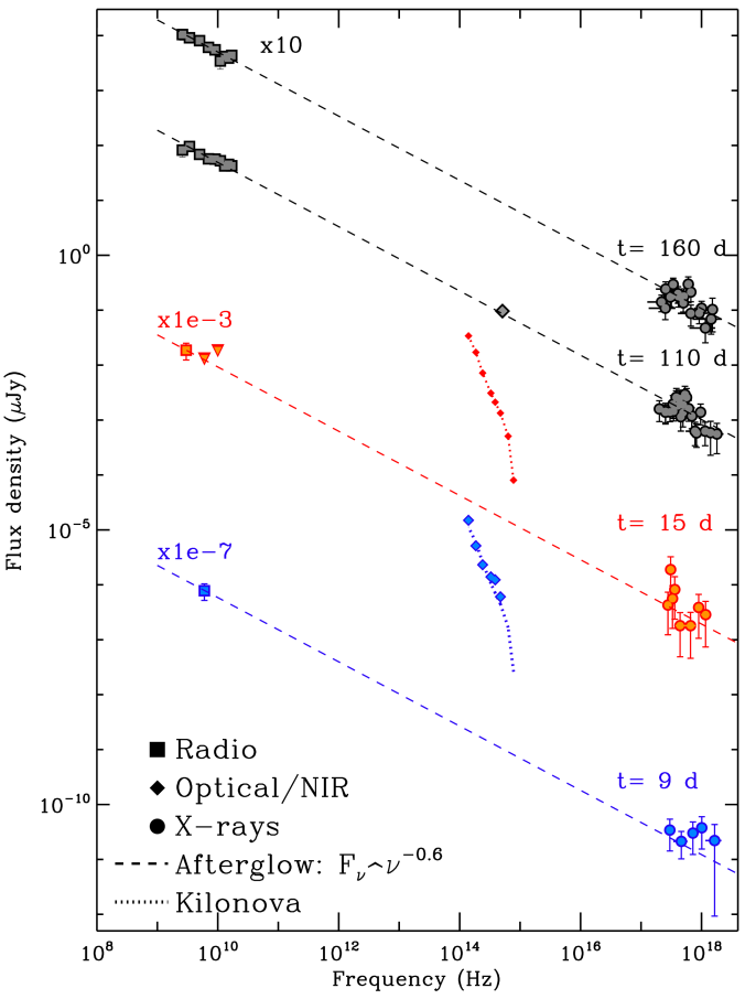 Evolution of radio, optical and X-ray fluxes to 160 days